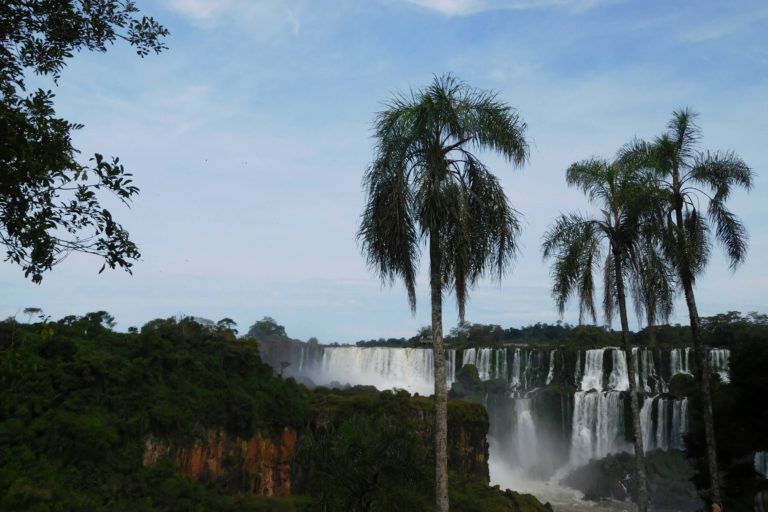 Waterfalls, blue sky, two palm trees, forest