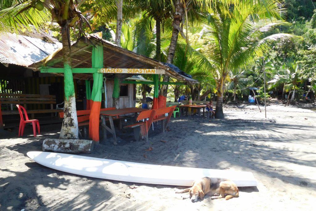 Beach, surf hut, dog, surf board