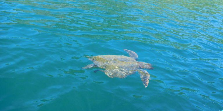 Schildpad snorkelen