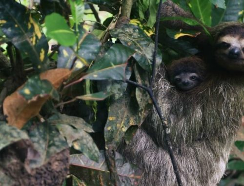 Luiaarden in boom