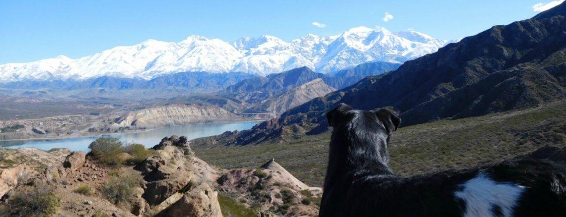 Hond voor Potrerillos meer met ijstoppen in de achtergrond