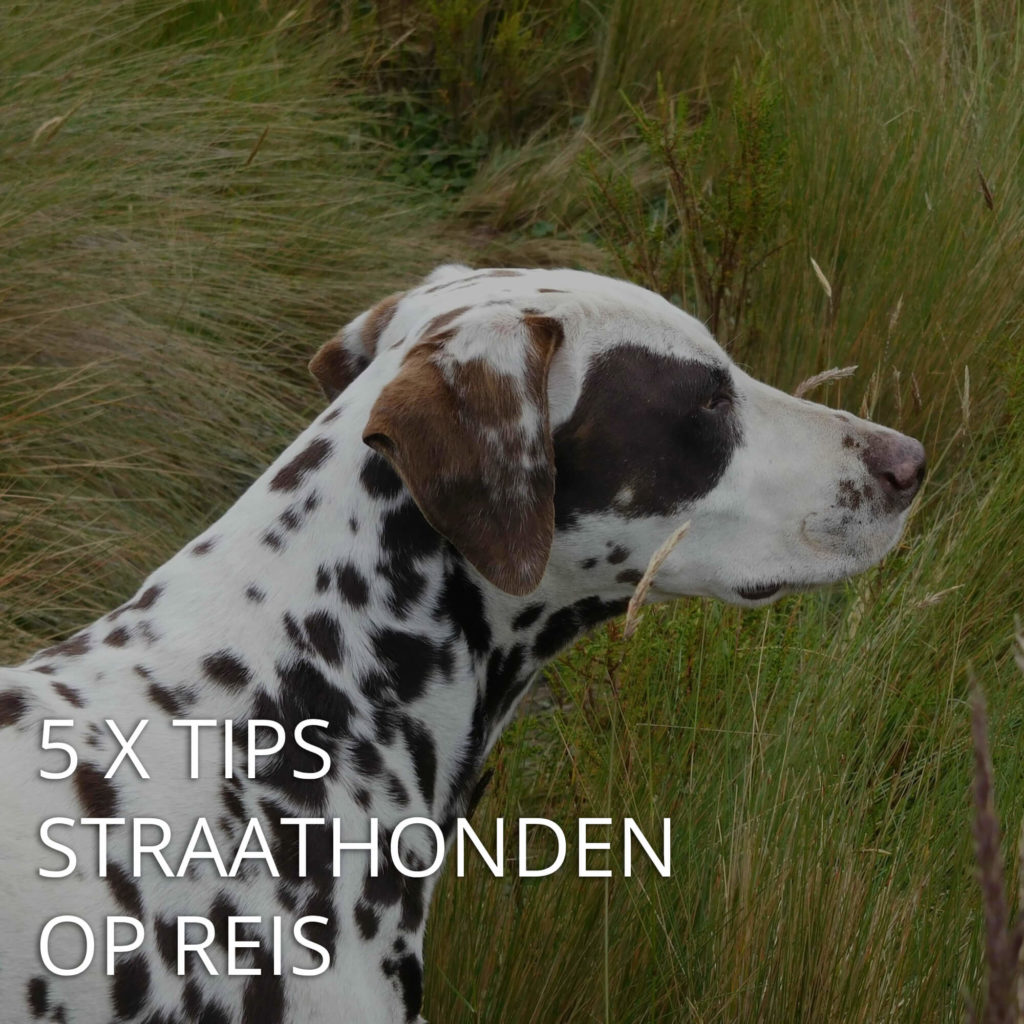 Post link: Reistips: 5 x tips straathonden op reis
