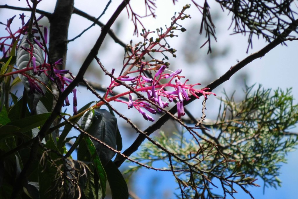 Roze bloem en groenige takken met blauwe achtergrond
