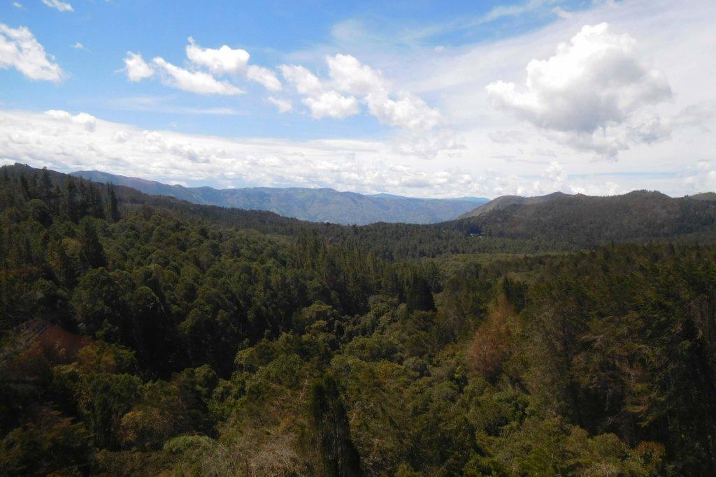 Uitzicht op de groene bossen rondom Medellín