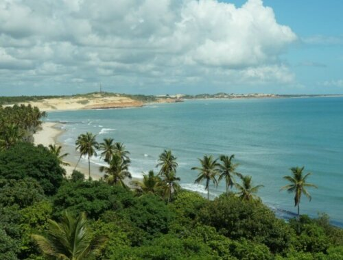 Palmbomen langs het strand in Natal