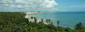 Palmtrees along beach in Natal