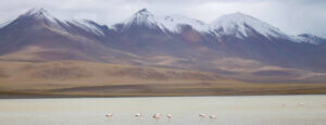Flamingos in water voor bergtoppen in Bolivia
