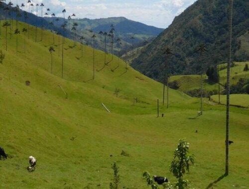 Lies geniet van uitzicht van de Cocora vallei in Colombia